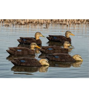 Avian-X Topflight Flocked Black Duck (Pk/6)