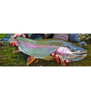 Real_Rainbow_Trout_Camouflage_Phone_Case