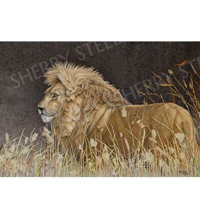Fire in His Eyes – Lion by Sherry Steele