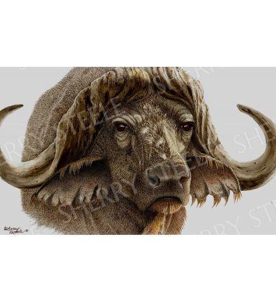 Gladiator – Cape Buffalo by Sherry Steele