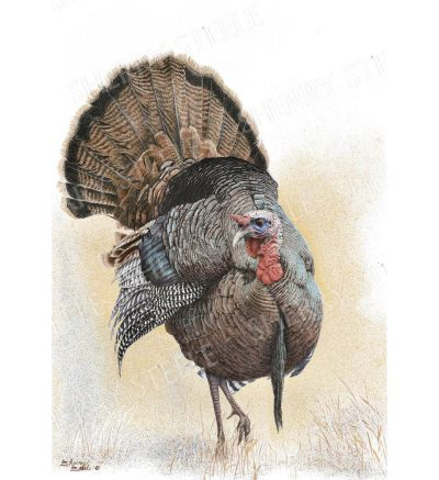 Something To Strut About – Turkey by Sherry Steele