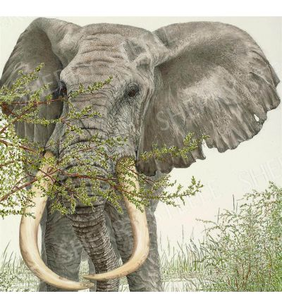 When There Were Giants Among Us – Elephant by Sherry Steele